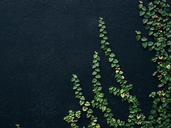 植物の光屈性と事業ブランディング
